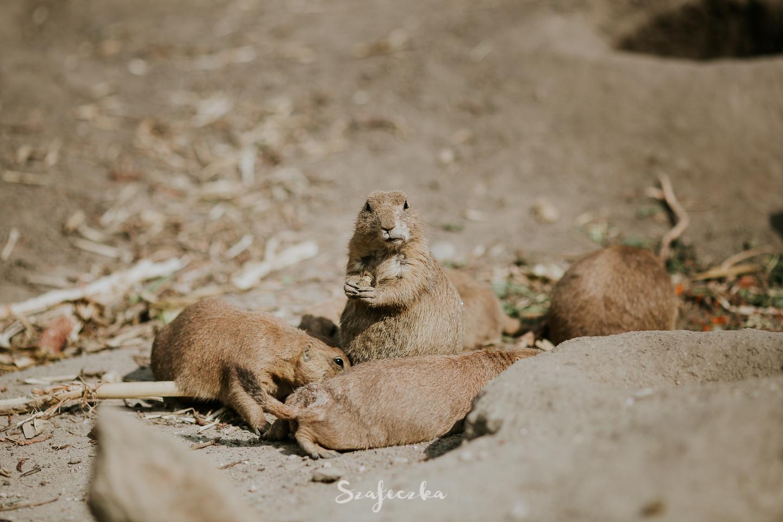 budapeszt zoo