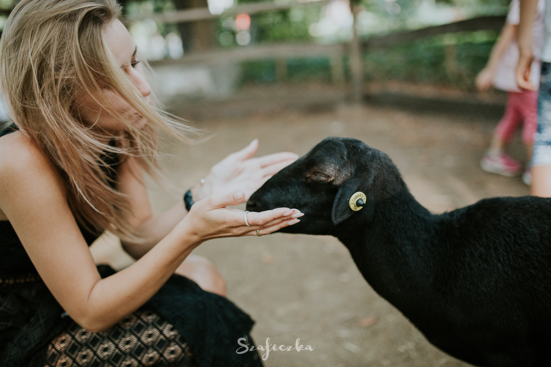 zoo budapeszt